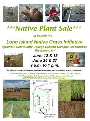 Native Grass Sale