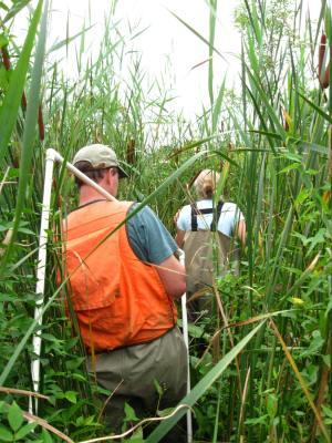 Catskill Marsh 2009-2