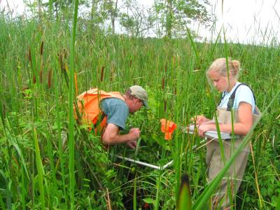 Catskill Marsh 2009-5