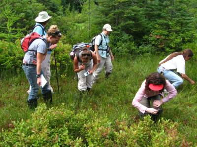 Identifying plants in the bog