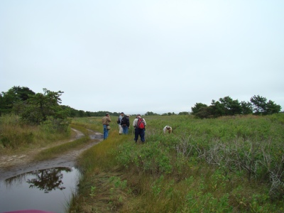 Field trip participants in Napeague Meadows