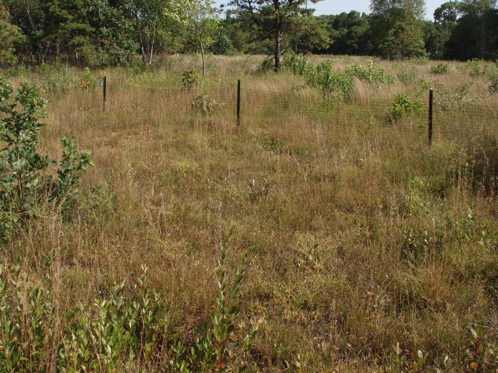In Search of Long Island Rare Plants 4 - Sandplain Gerardia (5/6)