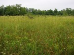 So far we have sampled a variety of wetlands like this wet meadow near Louisville.