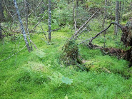 And a beautiful spruce-fir swamp southeast of the Carry Falls Reservoir.