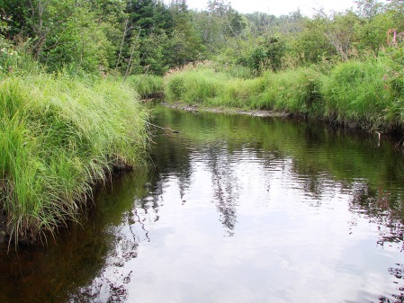 As well as an alder shrub swamp along Moose Creek southwest of Follensby Pond.